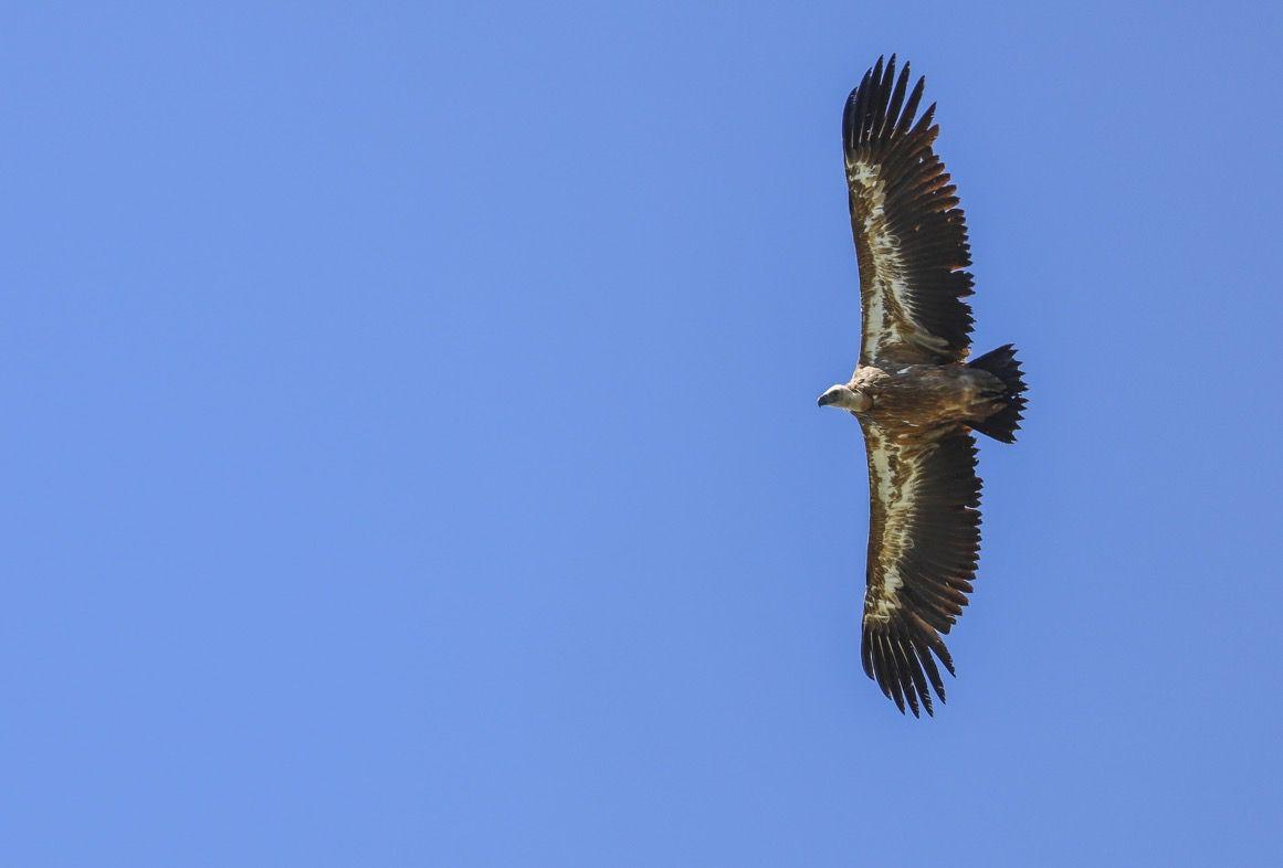 Le bal des vautours