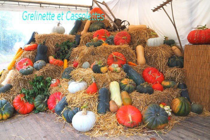 Fête des Plantes d'Automne de Saint Jean de Beauregard : Les Plantes à longue Floraison