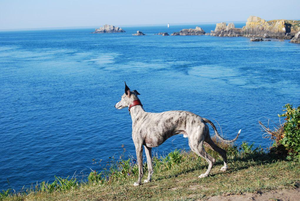 Album - Balades mer et campagne, cocooning...