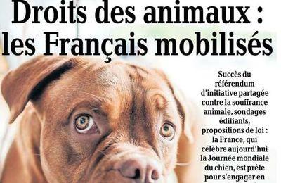 La Dépêche du Midi, la condition animale fait la Une !