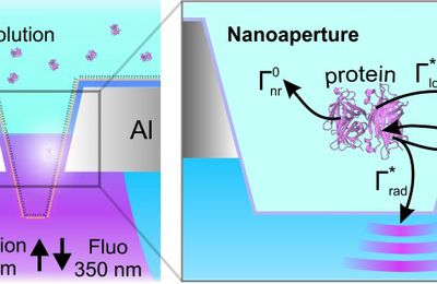 Purcell radiative rate enhancement of label-free proteins with ultraviolet aluminum plasmonics