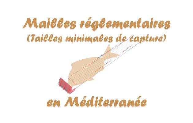 Tailles minimales de capture (mailles) en Méditerranée
