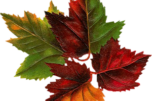 Free du lundi.... c'est l'automne encore