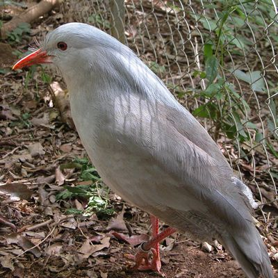 Blog à part.... Histoire du peuplement de la Nouvelle Calédonie