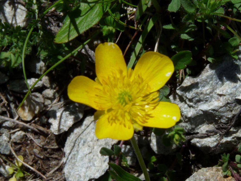 Fleurs 143