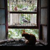 Chachou devant la fenêtre des voyageurs - Ichat et compagnie