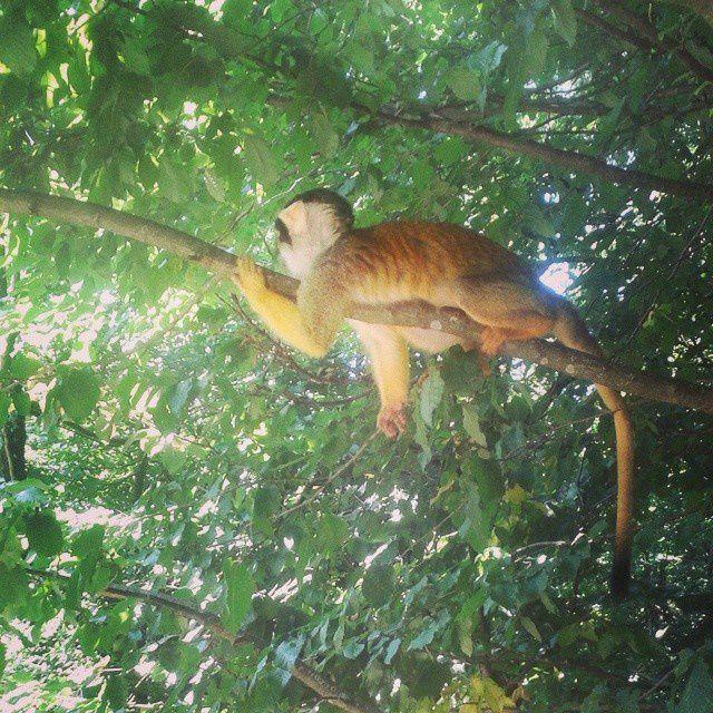 La Vallée des singes - Romagne