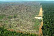 DEFORESTATION, COUCHE D OZONE