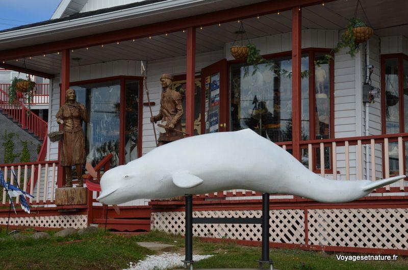 Tadoussac et le parc marin des baleines