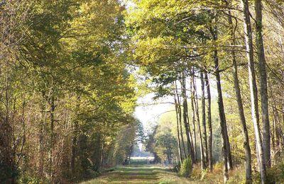 J'ai randonné au cœur du massif forestier de Breteuil