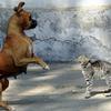 Conte: Le chat sauvage et le chien