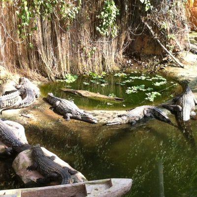 Promenade parmi les crocos