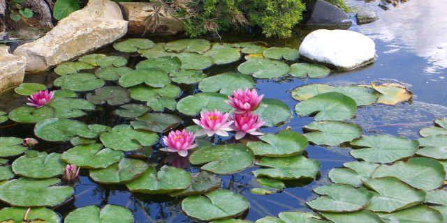 Le particolarità delle piante acquatiche