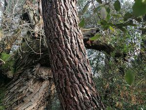 Les bois de Piolenc. Lou Castanié