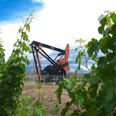 Argentine : Mendoza, production de vin et de pétrole.
