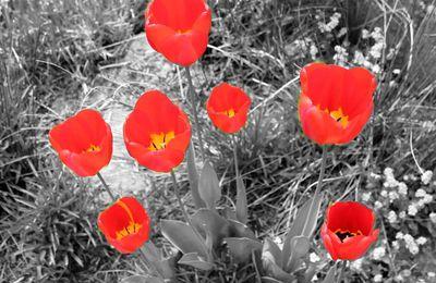 Kleiner Blumengruß