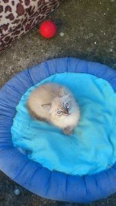Jocko, chaton mâle, à l'adoption -> adopté