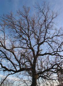 La série de photos autour du chêne