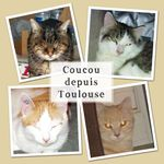 De Perpignan à Toulouse