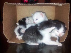 5 chatons de 3 semaines récupérés