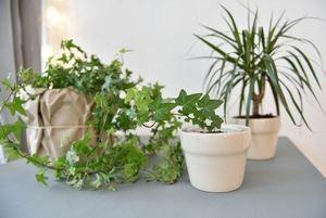 Prendre soin de ses plantes quand il fait chaud
