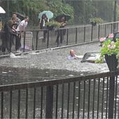 Three people trapped in cars after flash floods in south-east London - BBC News