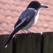 7. Le chant d'un oiseau - La minéralité expliquée aux cailloux