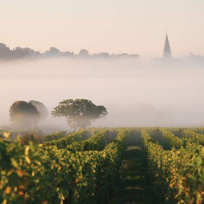 Livre du vin à paraître : Le val de Loire, terres de chenin
