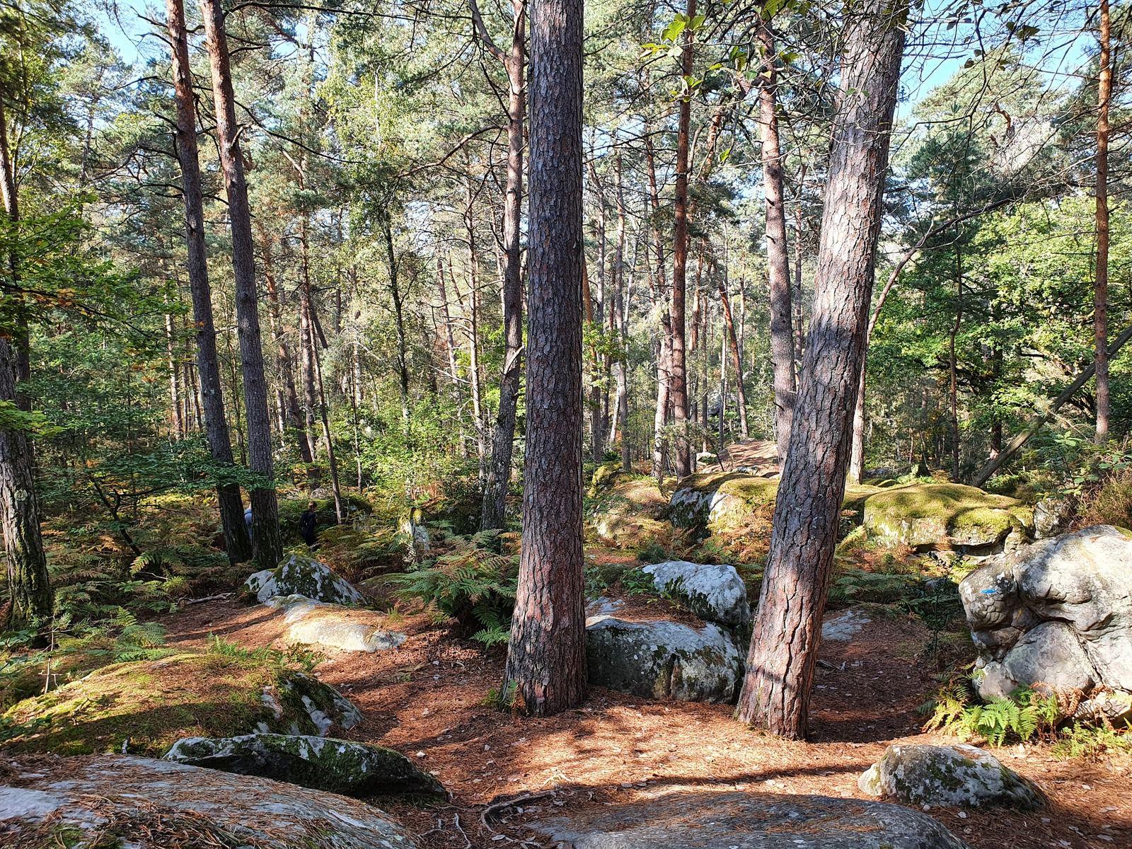 Les Longues Vallées, Forêt de Fontainebleau