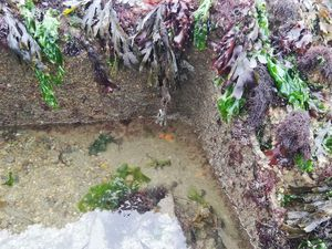 Animaux primitifs : les Spongiaires, ici 2 Subérites oranges dans un recoin de l'épave et reconnaissables à leur forme ronde et à la présence d'un unique oscule (orifice exhalant)