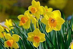 Bauernregel zum 1. März