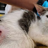 Sign Petition: Cats are being hunted and shot for fun in this Florida neighborhood!