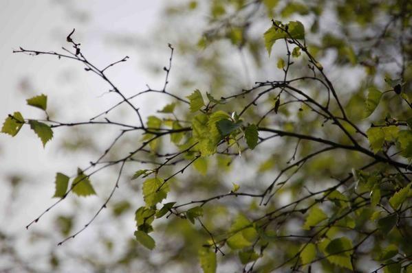 Album - Nature-et-jardin-3