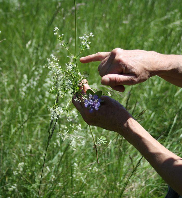 Pour découvrir une flore printamnière riche en couleurs, odeurs, saveurs..   Sujet d'émerveillement constant pour qui sait observer et poser son regard. Atelier botanique animé par Fabienne