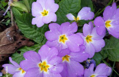 Le printemps : le retour à la vie