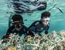 Programmes de Restauration des Récifs Coralliens