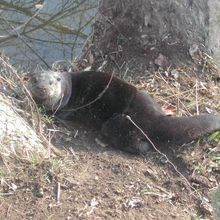 Discover the Bottleneck Trappers When Otter Capturing