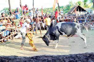 Sport traditionnel : Le kidramadrama, une corrida à la Nosy Be