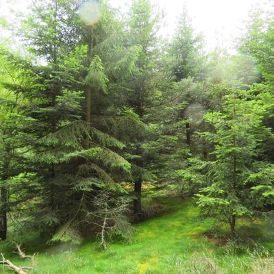 Dans les bois de Varennes / Balade en Haute-Loire près de Saint-Privat-d'Allier