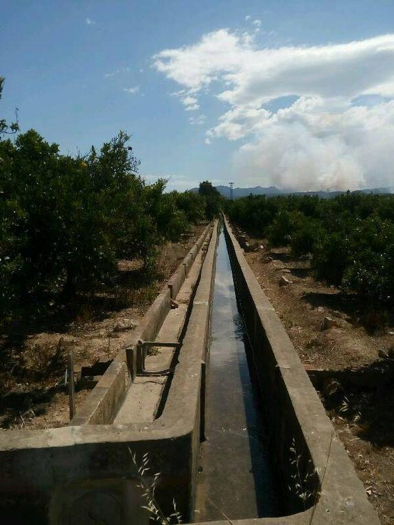 Arrosage des arbres fruitiers à la romaine.