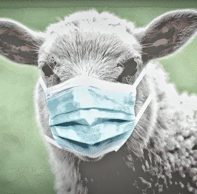 Le silence des moutons ou celui des agneaux !? (Partie deux)