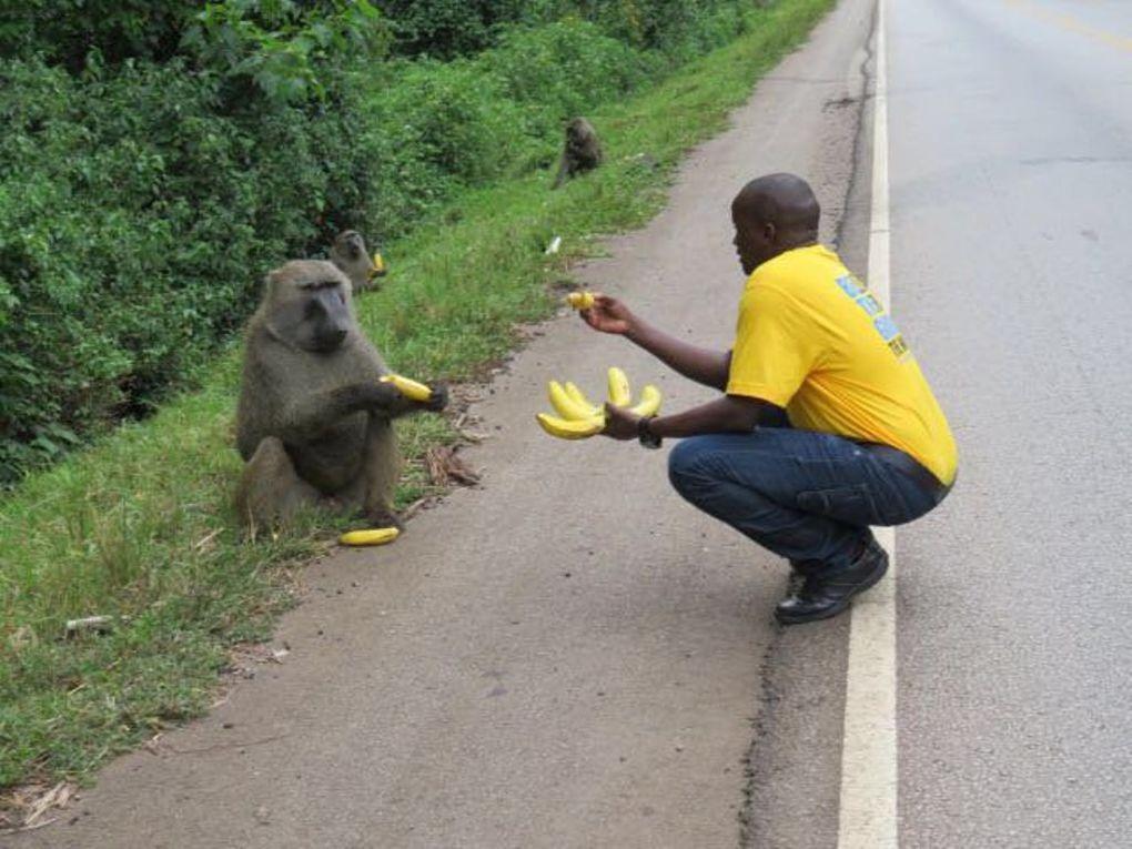 Imágenes de Dabani, Uganda.- El Muni.