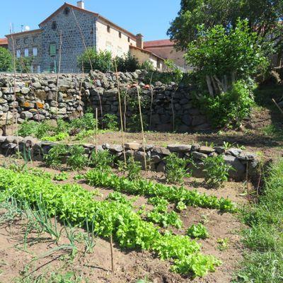 Mon jardin potager / Balade en Haute-Loire