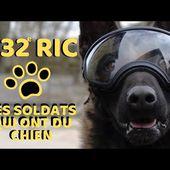 France : les chiens soldats du 132e régiment d'infanterie cynotechnique - Spécial Défense
