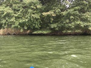 sortie kayak et surprises