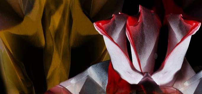 Démon et la rose