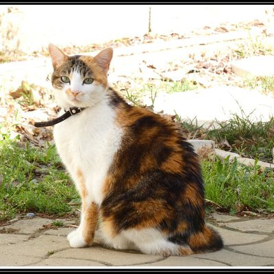 Photo : chat Isabelle