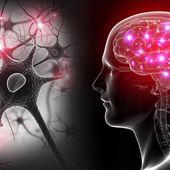 Peut-on ranimer un cerveau mort ? - Sciencesetavenir.fr