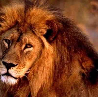 Actions to take ! against fighting and killing a lion for boosting TOURISM