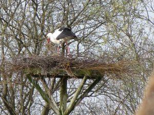 Les phoques et oiseaux de la baie de Somme